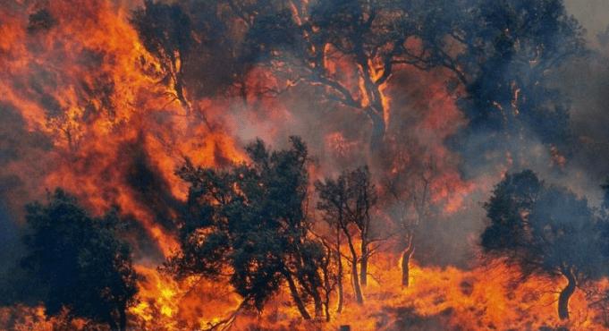 Un piccolo contributo sugli incendi in Sardegna